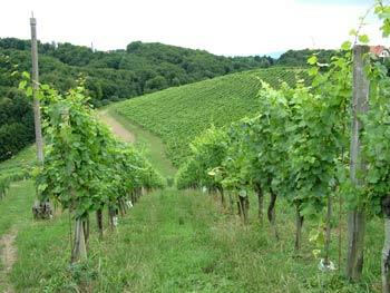 Tourist farm Bracko vineyards