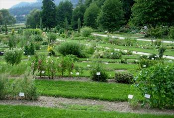 favorite place: Maribor botanic garden 5