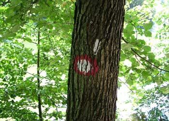 Favorite routes - signpost