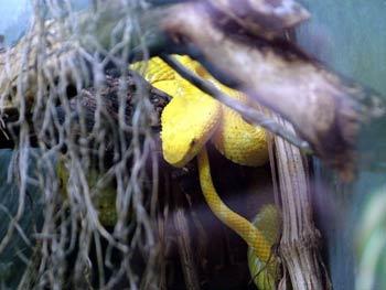 Maribor Aquarium Terrarium - snakes