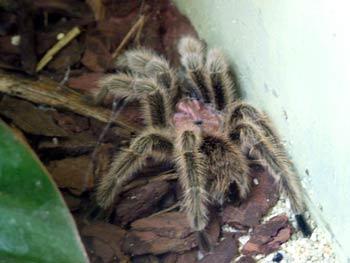 Maribor Aquarium Terrarium - spiders