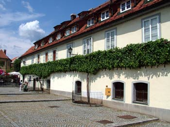 Maribor city guide - Old vine