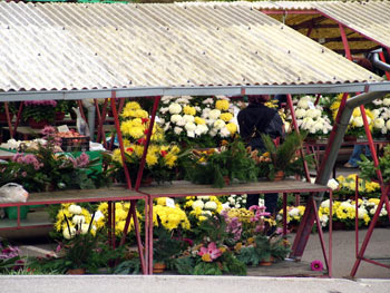 Maribor open market shopping
