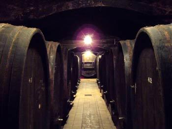 Oak barrels in Vinag wine cellar.