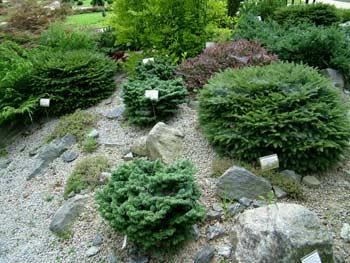 favorite place: Maribor botanic garden 8