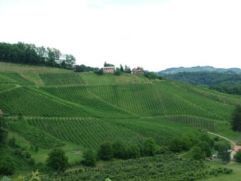 Favorite route - wine road 2