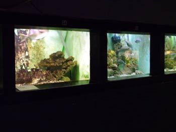 The Aquarium's fish tanks