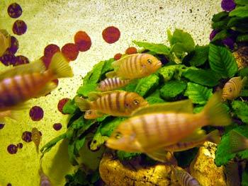 Tropical fish in Maribor Aquarium