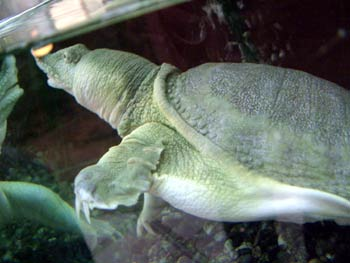 Maribor Aquarium Terrarium - turtle