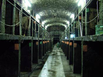 Favorite route - Vinag wine cellar 2